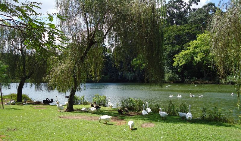 Parque do Ibirapuera SP - Lago